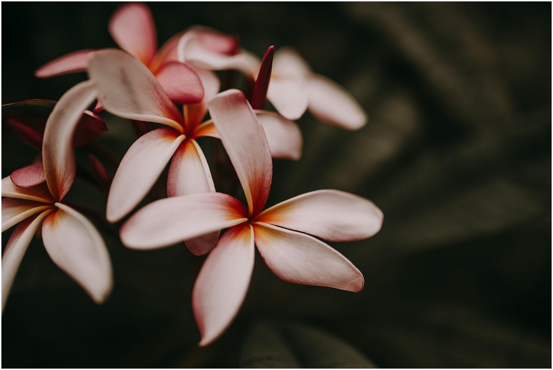 Hana Maui wedding 2